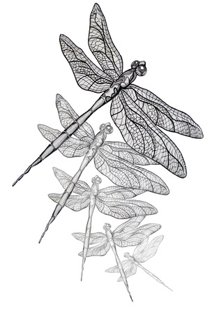 dragonflies: Fly as a Dragon original pen illustration
