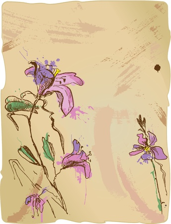 aquarelle sketch of iris flowers on old parchment with empty space for your text  Vector