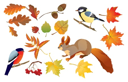 Set of isolated autumn forest leafs and little birds and animals (squirrel, bullfinch and tomtit).