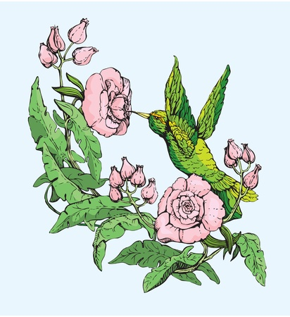 hand drawn rose: Colibri and flowers.  Illustration