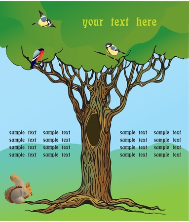 rooted: fairy-tale rooted oak tree, squirrel and birds
