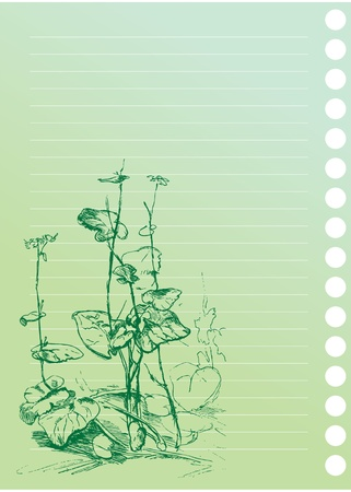 burdock: sketch of burdock plant in artist`s notebook Illustration