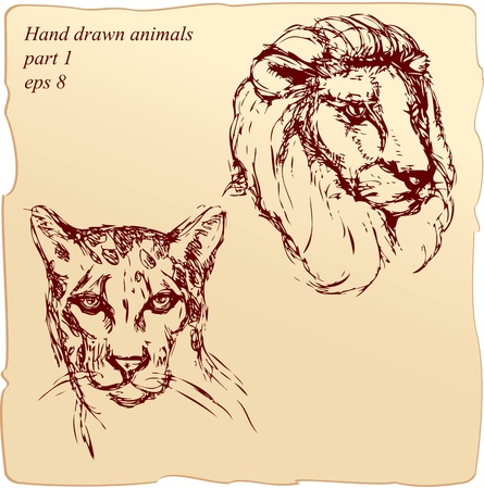 hand drawn ink portrait sketch of lion and cheetah headshand drawn ink portrait sketch of lion and cheetah heads Vector