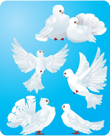animal angelic: white pigeons Illustration