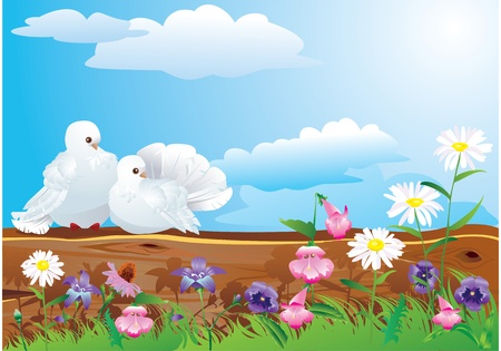 flower fields: Couple of white pigeons with beautiful summer wild flowers