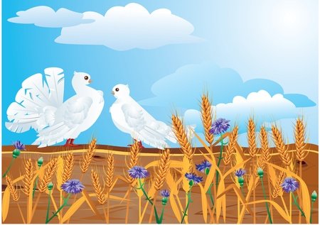 country side: Couple of white pigeons with beautiful summer wild flowers and earsCouple of white pigeons with beautiful summer wild flowers and ears Illustration