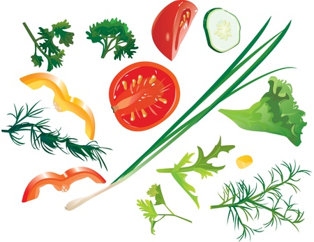 indian food: Set of colorful isolated vegetables - tomato, corn, cucumber, onion, sweet pepper, dill, parsley