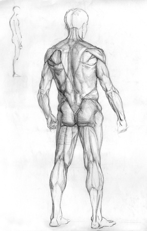 naked male: hand drawn pencil sketch illustration of the male human muscle anatomy - back side