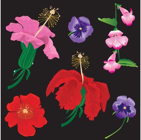 Set of Flowers bloom - hibiscus, violet, convolvulus - on black background Vector