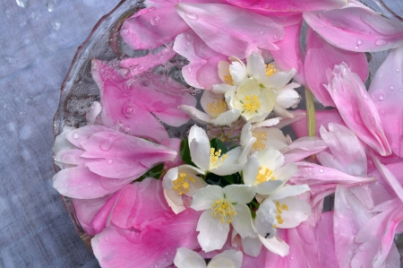 jasmin flowers and peon petals floating in water photo