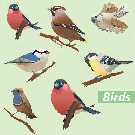 Set of birds - tit, bullfinch, sparrow, crossbill