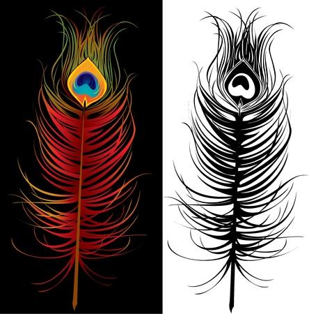 plumas de pavo real: pluma de pavo real - colorido y blanco y negro