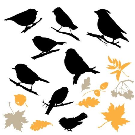 pajaro dibujo: Pájaros y siluetas de plantas aisladas sobre fondo blanco