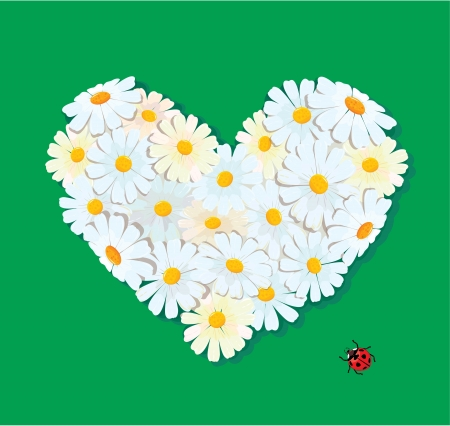 Heart is made of daisies on a green background. Valentines day card.  Vector