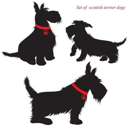 collarin: Juego de siluetas de Scottish terrier perros