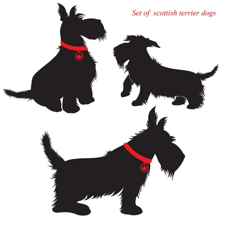 dog leash: Set of of scottish terrier dogs silhouettes Illustration