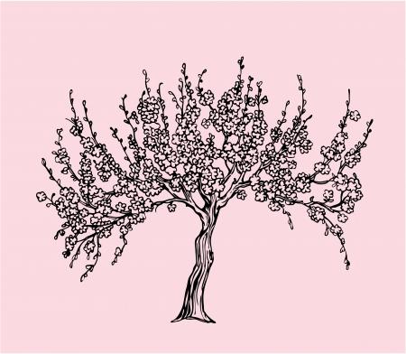 arbol de cerezo: Dibujado a mano Sakura con flor en estilo de línea