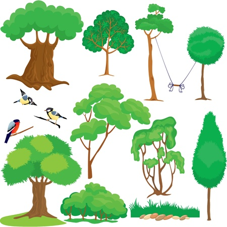 rowan tree: Set of trees, bushes and birds isolated on white background