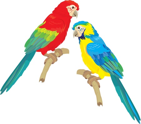 green parrot: Blue Yellow and Red Blue Macaw parrots isolated on white background
