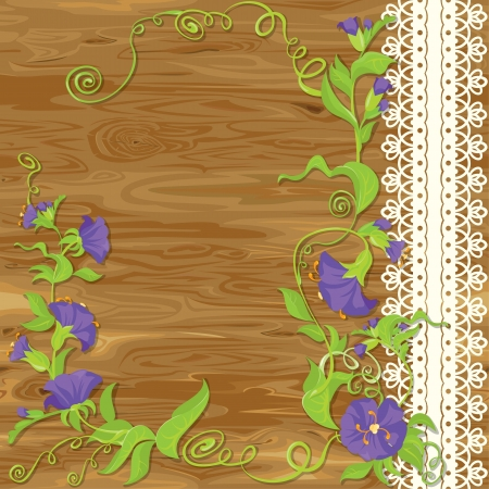 morning glory:  Convolvulus Flowers on wood baskground with empty space for text Illustration