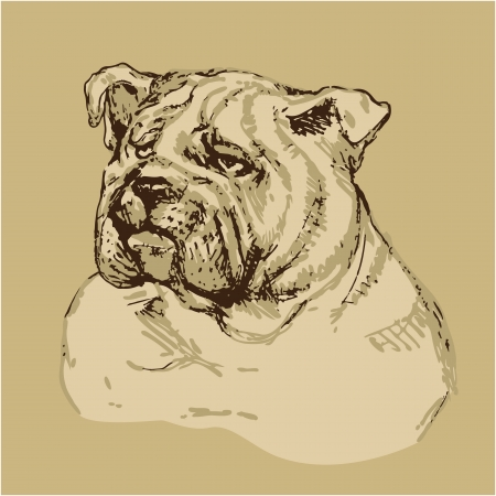 pure breed: Bulldog head - hand drawn illustration -sketch in vintage style