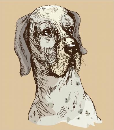 dalmata: Dalmata testa - illustrazione disegnata a mano-sketch in stile vintage