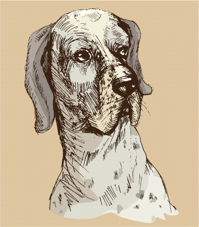 pure breed: Dalmatian head - hand drawn illustration -sketch in vintage style
