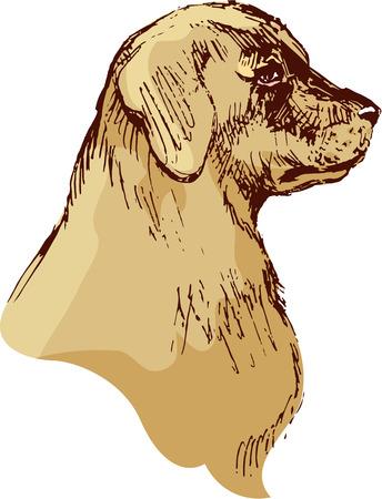 bloodhound: Dog head - bloodhound hand drawn illustration - sketch in vintage style