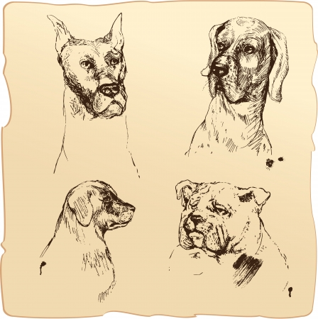 dog pen: Set of Dogs heads - dalmatian, bloodhound, bulldog hand drawn illustration - sketch in vintage style