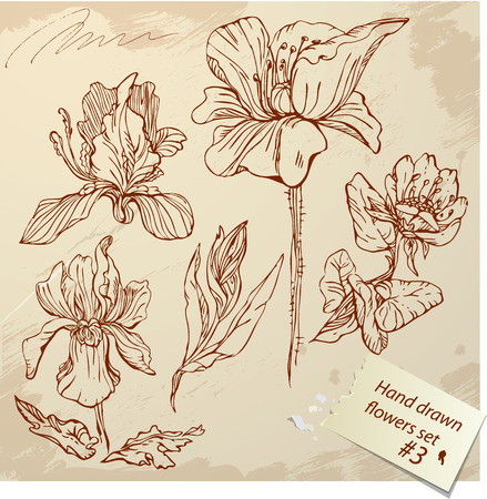 Set of Vintage Realistic graphic flowers - hand drawn images. Vector