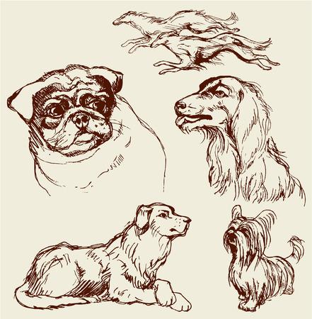 一連の犬 - ラブラドル ・ レトリーバー犬、猟犬、パグ、セッター、ラップ犬 - 手描き下ろしイラスト-ビンテージ スタイルのスケッチ