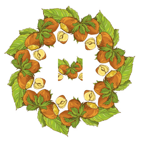 nutty: Circle ornament with highly detailed hand drawn hazelnuts isolated on white background. Pattern endless fragment. Illustration