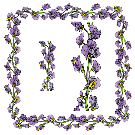 sweet pea: Set of ornaments - decorative hand drawn floral border and frame with  sweet pea flowers, isolated on white background.