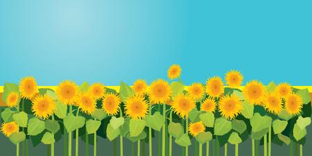 Zomerseizoen, natuur beeld, veld met zonnebloemen onder blauwe hemel
