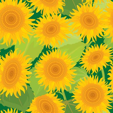 sunbeam background: Seamless pattern with sunflowers. Summer season, nature background.