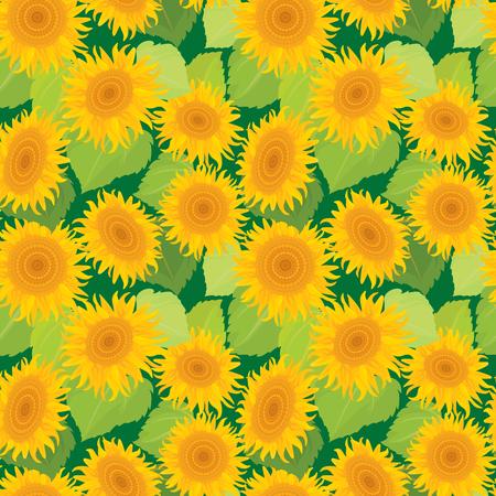 summer nature: Seamless pattern with sunflowers. Summer season, nature background.