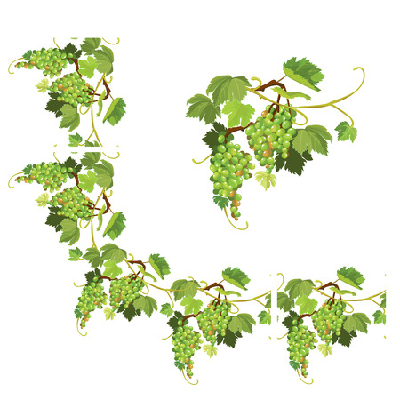 repeated: Set of Grapes frame, vignette and repeated element  for wine labels or menu design. Isolated on white background.