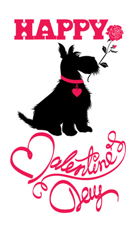 shaggy: Holiday card. Calligraphic hand written text Happy Valentine`s Day and scottish terrier dog silhouette with rose, isolated on white background.