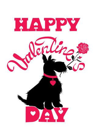 scottish terrier: Holiday card. Calligraphic hand written text Happy Valentine s Day and scottish terrier dog silhouette with rose, isolated on white background. Illustration