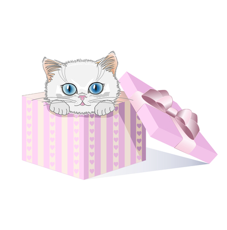 kitten small white: White kitten with blue eyes in a gift box