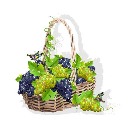 Wicker basket with grapes