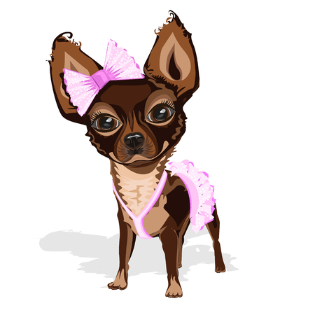Sweet little dog in pink clothes