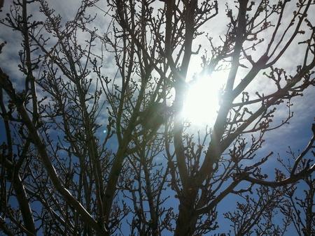springtime: Springtime sun Stock Photo