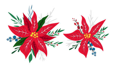 Set of 2 compositions with red blooming poinsettias. Vector illustration isolated on white. Christmas star flower. Cartoon flat design. For Christmas or New Year greeting cards, banners, invitations. Ilustração