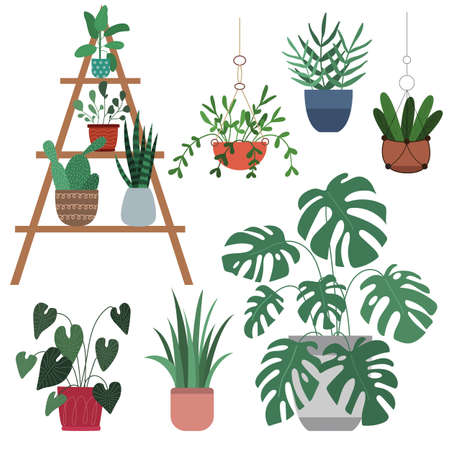 Set of houseplants - monstera, cactus, ficus, dracaena, aglaonema, sansevieria. Collection of indoor plants in pots. Home decor. Vector flat illustration. Isolated on white background