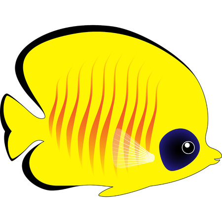 butterflyfish: Cute Yellow Butterfly Fish Isolated on White