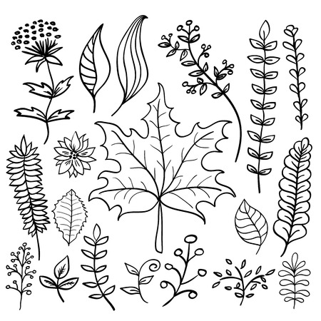 twigs: Hand drawn doodle vector elements set (Vol. 4 of 9). Black leaves silhouettes isolated on white. Twigs, maple leaf and flowers