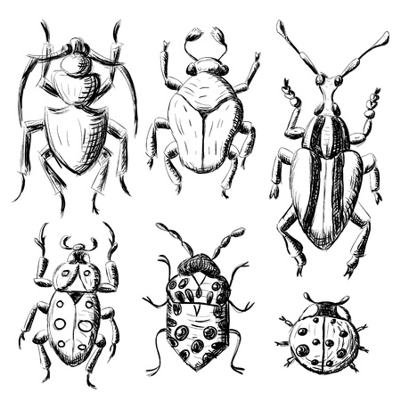 lady beetle: Hand drawn sketch beetles set (4 of 4). Art collection insects for prints or design. Isolated on white