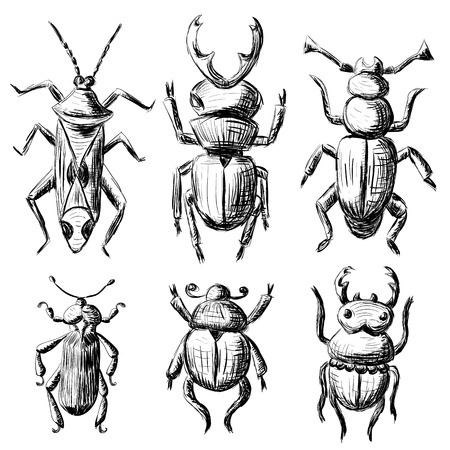 stag beetle: Hand drawn sketch beetles set (3 of 4). Art collection insects for prints or design. Isolated on white