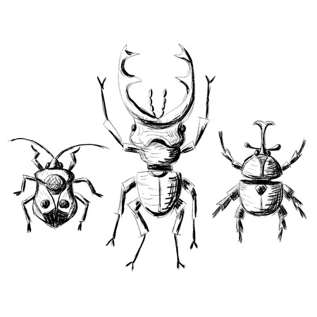 stag beetle: Hand drawn sketch beetles set (1 of 4). Art collection insects for prints or design. Isolated on white
